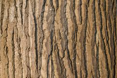 Bark of a large tree basking in the sun Stock Images