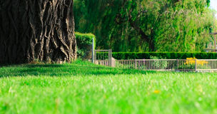 Bark in lawn. Wide tree bark in green lawn Royalty Free Stock Photos