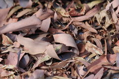 Bark and Leaves in Autumn Stock Photo