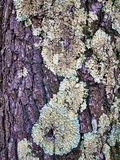 Bark and lichen of a tree stock photos