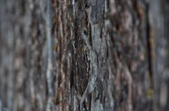 Pine bark background or texture stock photography