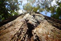 Bark Macro. Macro upshot of tree bark with canopy above Stock Photos