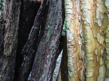 Bark in the middle of two wild colors Stock Images