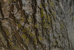 Bark or More. Bark and moss live together side by side in nature Royalty Free Stock Photography