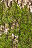 Bark and moss Stock Image