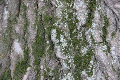 Bark and moss Royalty Free Stock Images