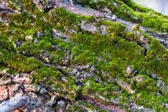 Bark with moss Stock Photos