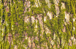 Bark and moss Stock Photos