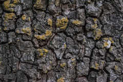 Bark with moss Stock Photos