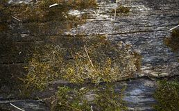 Bark and Moss Background Royalty Free Stock Photo