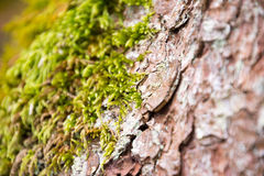 Bark and moss in a forest Royalty Free Stock Images