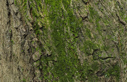 Bark and moss Royalty Free Stock Photo