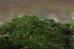 Bark and moss Stock Images