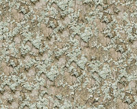 Bark and moss seamless background. Royalty Free Stock Images