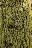 Bark on Moss stock photography