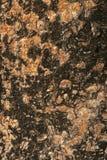Bark moss Texture Stock Photo