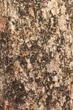 Bark moss Texture Stock Photos