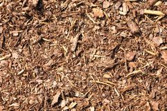 Bark mulch Stock Image