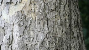 Bark of oak tree stock video footage