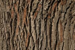 Bark of an Oak tree. A closeup of the bark of an Oak tree. When taking a closer look the textures and colors are simply amazing royalty free stock photo