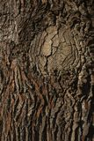 Bark of an Oak tree. A closeup of the bark of an Oak tree. When taking a closer look the textures and colors are simply amazing stock photography