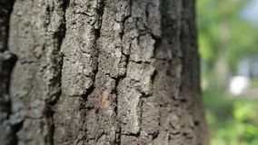 Bark of oak tree stock video