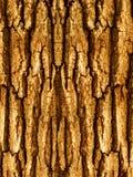 Bark Of A Tree An Oak Royalty Free Stock Image