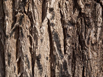 Free Bark Of An Old Grey Tree Stock Image - 10821241
