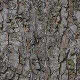 bark old Stock Image