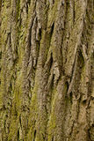 Bark of the old Royalty Free Stock Image