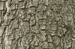 Bark of Old Oak Seamless Tileable Texture. Royalty Free Stock Photo