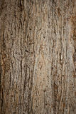 Bark of Old Pine Tree Stock Images