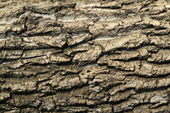 The bark of an old tree Stock Photos