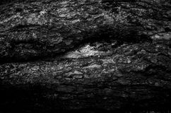 The bark of an old tree. Black-and-white. Abstract eye stock images