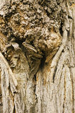 Bark of old tree close-up, wood, brown nature background Stock Photos