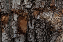 The bark of an old tree Stock Image