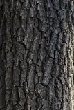 The bark of an old tree royalty free stock images