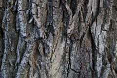 The bark of an old tree nature texture Royalty Free Stock Photo