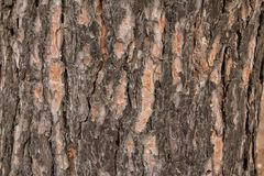 Bark of an old tree in the park as texture. stock photo