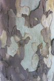 Bark of an old tree - Textures Stock Photography