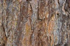 Bark of an old tree trunk pine Stock Photos