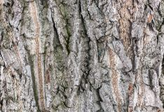The bark of an old tree. The bark of old willows stock photos