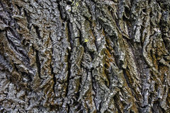 Bark old tree Stock Images