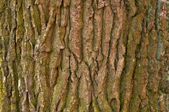 Bark old tree Stock Photos