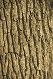 Bark on old weathered tree trunk Stock Image