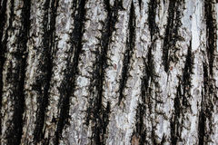 Bark of Old Wood Tree Texture Background Pattern Stock Image
