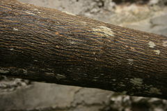 Bark of the orange tree. It shows the texture and skin of the tree of brown dark color with some spots, is a branch of great size Stock Images