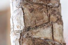 Bark of a palm royalty free stock photos