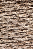 Bark of palm tree. Texture background stock image