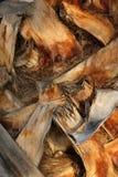 Bark Palm Tree Stock Photo